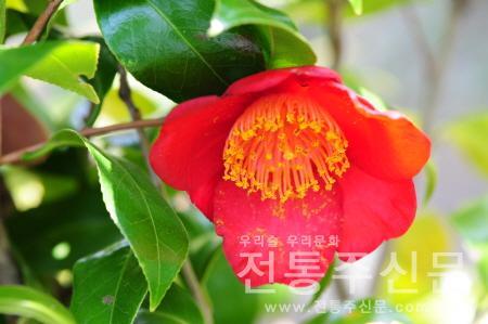 '동백꽃 사진전'을 내달 31일까지 개최한다..jpg