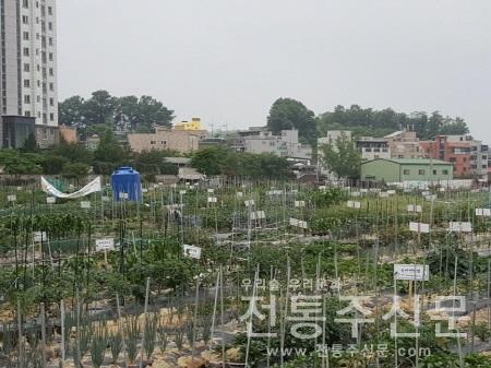2020년 도시농장 텃밭 가꾸기 이용자 모집.jpg
