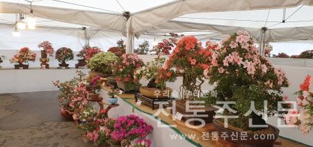분재공원에서 이색철쭉분재 전시회 개최.jpg